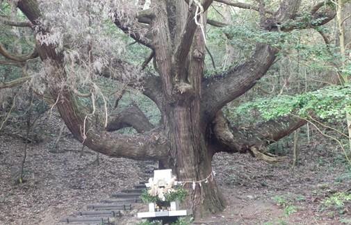龍ヶ岳 大杉